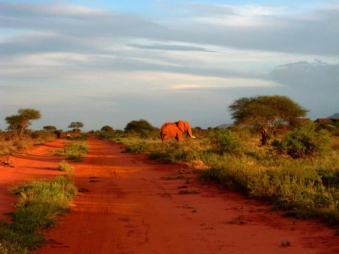 kenia-afrika-reise-bilder-190