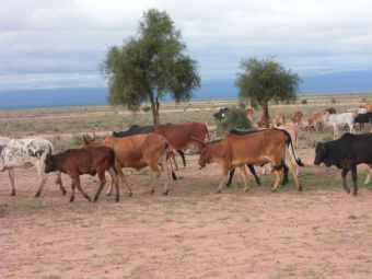 kenia-afrika-reise-bilder-429