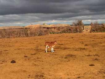 Massai Reservat