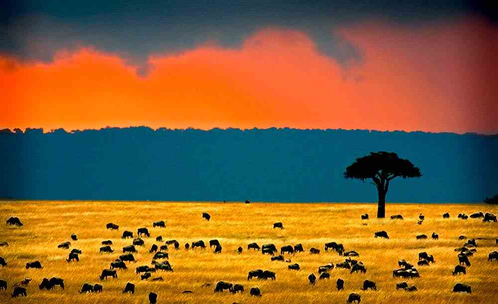 Kenia Klima strand und safari, reisefuehrer, allgemeines, reisetipp mit reiseleiter und Informationen für die alle Kenia safaris.