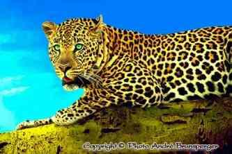 Leopard - kenia mein personliches konzept reise urlaub safaris afrika fuhrer