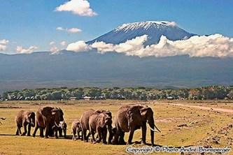 Elefanten vor dem Kilimandscharo - kenia mein personliches konzept reise urlaub safaris afrika fuhrer