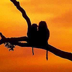 Affen - Kenia safari Kenia reisefuehrer für mit reisetipp für familien reisen.
