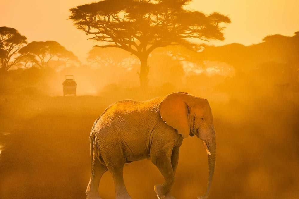 Kenia safari Kenia reisefuehrer für mit reisetipp für familien reisen. Strandurlaub Wilde Tiere kenia fotosafari Big Five safari bei einem lokalen Reisebetreuer - Amboseli Kenia