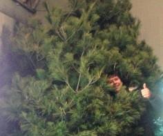 Biggest Christmas Tree Ever!