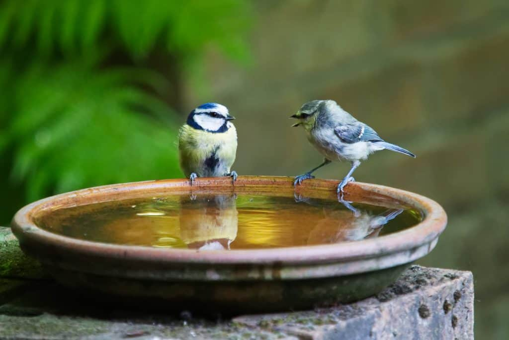 Wild Birds And Access To Water Kennedy Wild Bird Food Guide