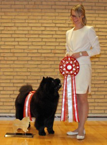 Chow Chow Hjelme Piuk Chow Possesses Black Passion årets Chow chow 2015