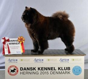 Chow Chow Kennel Hjelme Piuk Chow Possesses Black Passion Dansk Vinder 2015