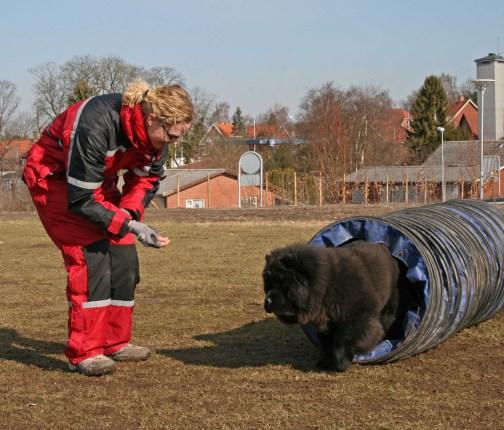 Chow Chow til agility, hundelivet hos Kennel Hjelme
