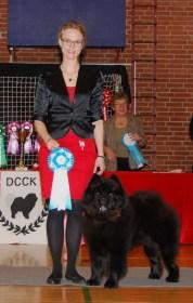 Kennel Hjelmes Chow Chow årets hund nr. 6 i 2012. Piuk Chow Possesses Black Passion