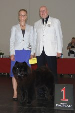 Kennel Hjelmes Chow Chow Ny International champion. Piuk Chow Possesses Black Passion