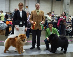 Kennel Hjelmes Chow Chow Bao-Fang's Hong-Se Yue-Liang Bedst i racen i Fredericia 2015