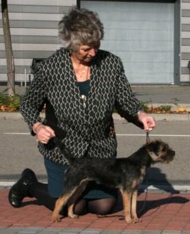 Kennel Hjelme Border Terrier Hjelme Once Upon A Time EUJW 14