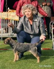 Kennel Hjelme Border Terrier Hjelme Lagavulin BIM Varde 2015