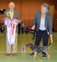 Kennel Hjelme Border Terrier Hjelme Lagavulin DTK Vinder 2015