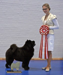 Kennel Hjelme Chow Chow Piuk_Chow_Possesses_Black_Passion Årests Chow Chow 2016