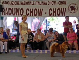 Chow Chow Hjelme Bao-Fang's Hong-Se Yue-Liang og Stine Hjelme