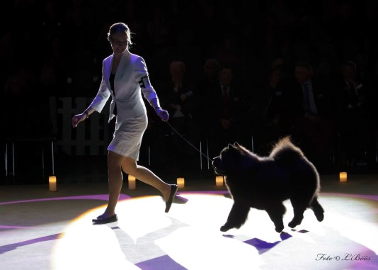 Chow Chow Hjlelme Piuk Chow Possesses Black Passion, Stine Hjelme Best In Show