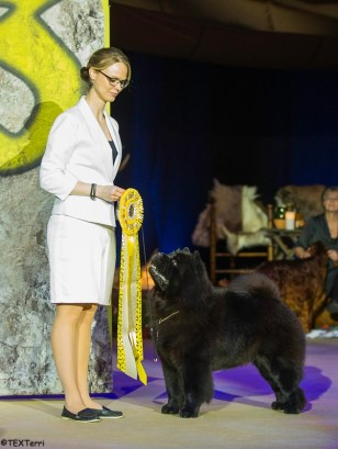 Chow Chow BIS Piuk Chow Possesses Black Passion, Stine Hjelme Best In Show