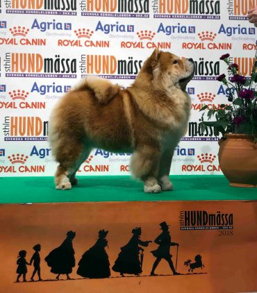 Chow Chow Kennel Hjelme Piuk Chow Sweet Magic Of Phantasy