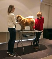 Pat Hasting Chow Chow Kennel Hjelme Piuk Chow Sweet Magic Of Phantasy