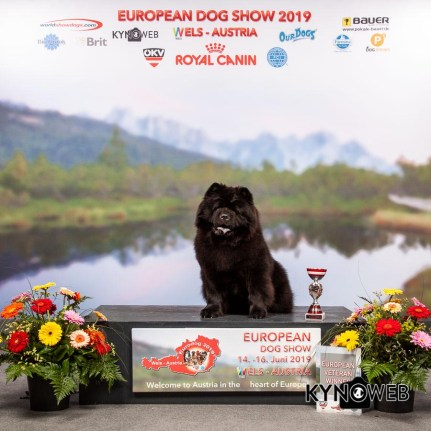 Chow Chow Kennel Hjelme Piuk Chow Possesses Black Passion
