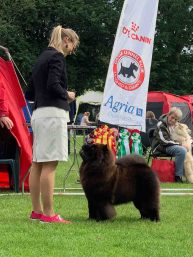 Chow Chow Hjelme Can't Stop The Feeling!, Stine Hjelme
