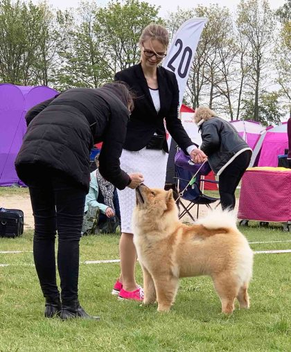 Chow Chow Hjelme China In Your Hand, Stine Hjelme