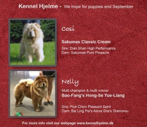 Chow Chow parring kennel Hjelme