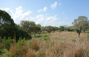 Senses of Africa tour at Disney's Animal Kingdom Lodge