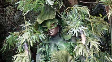 Bamboo (3)