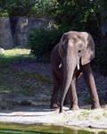 walt disney world, animal kingdom, kilimanjaro safaris