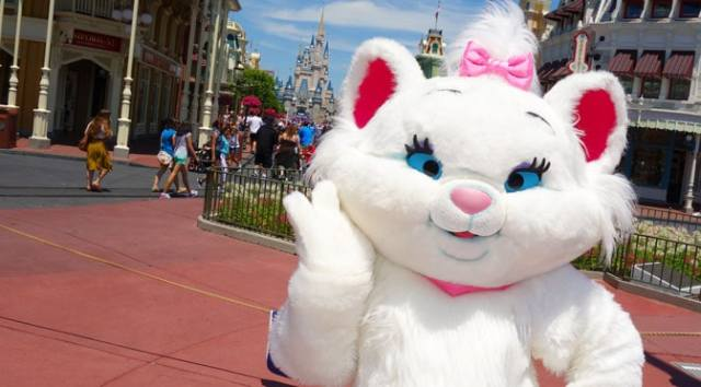 Marie leaving Magic Kingdom and Stitch is coming
