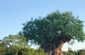 Disney Guest Brought Gun to Animal Kingdom, Arrested
