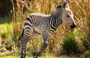 New Baby Animals Arrive at Animal Kingdom Lodge