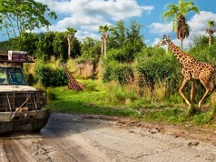 Social Distancing on Kilimanjaro Safaris: What to Expect (and where not to sit!)