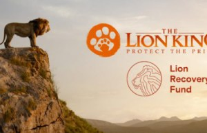 World Lion Day update on the Lion Recovery Fund