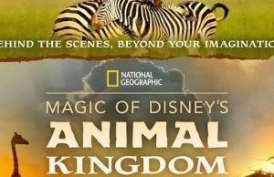 Magic of Disney's Animal Kingdom Premiering on Disney+