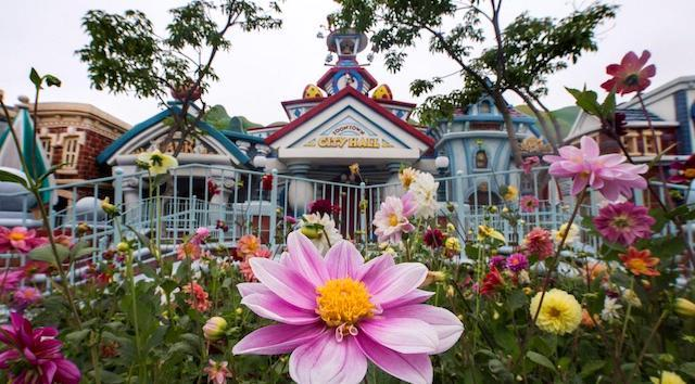 Limited Dining Available for Reopening at Disneyland