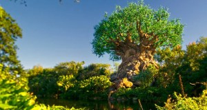 New Park map removes 2 Guest favorite attractions from Disney World