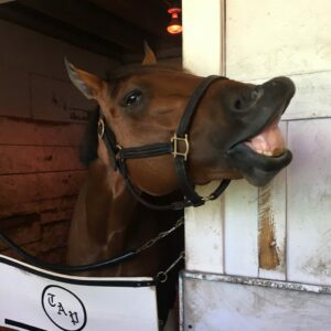 Patch Kentucky Derby Odds