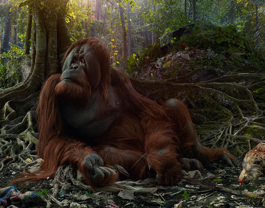 large-simen_johan-untitled-175-orangutan