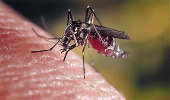 Anophèle vecteur du Paludisme - préventions au Kenya