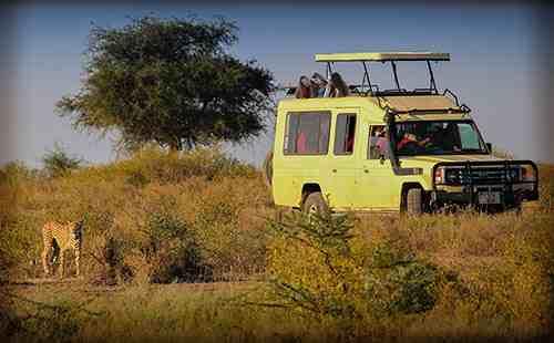 C'est comment un vrai safari au Kenya, voyez la photo