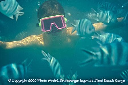 Snorkeling dans le lagon Plongée Diani Kenya
