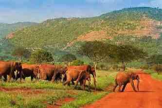 Eléphants rouge Parc Tsavo Kenya