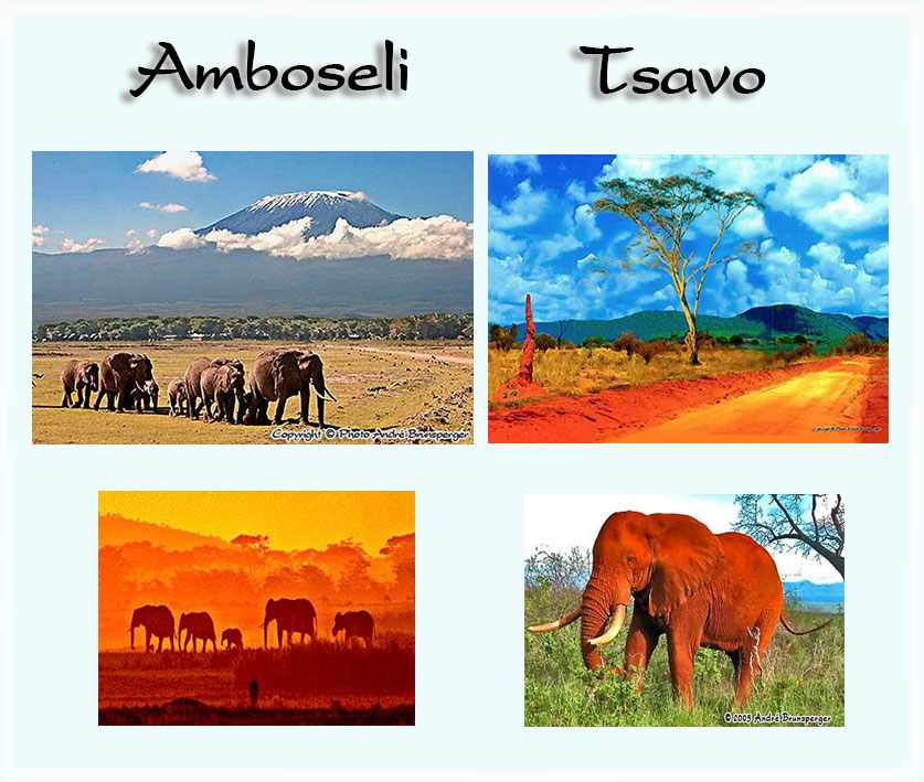 Kenya Tsavo Amboseli safari 4 days from Indian Ocean beaches Diani Beach Mombasa. Departure from your hotel South of Mombasa.