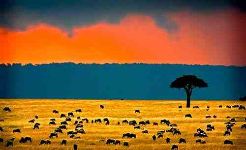 Monsoon - Kenya climate beaches and safaris