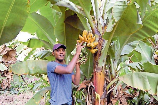 Young And Wealthy From Banana Farming Kenya2uhub