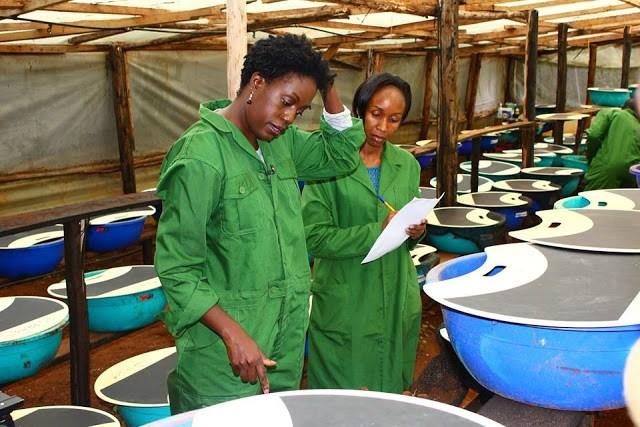 Rosemary Odinga pictured at her Kiserian snail ranch in 2015.